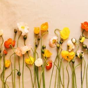 fleurs des champs outils coandflow